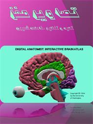 دانلود کتاب تصاویر مغز انسان ( بخش های مختلف با نام گذاری لاتین )