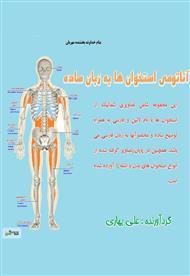 آناتومی استخوان ها به زبان ساده